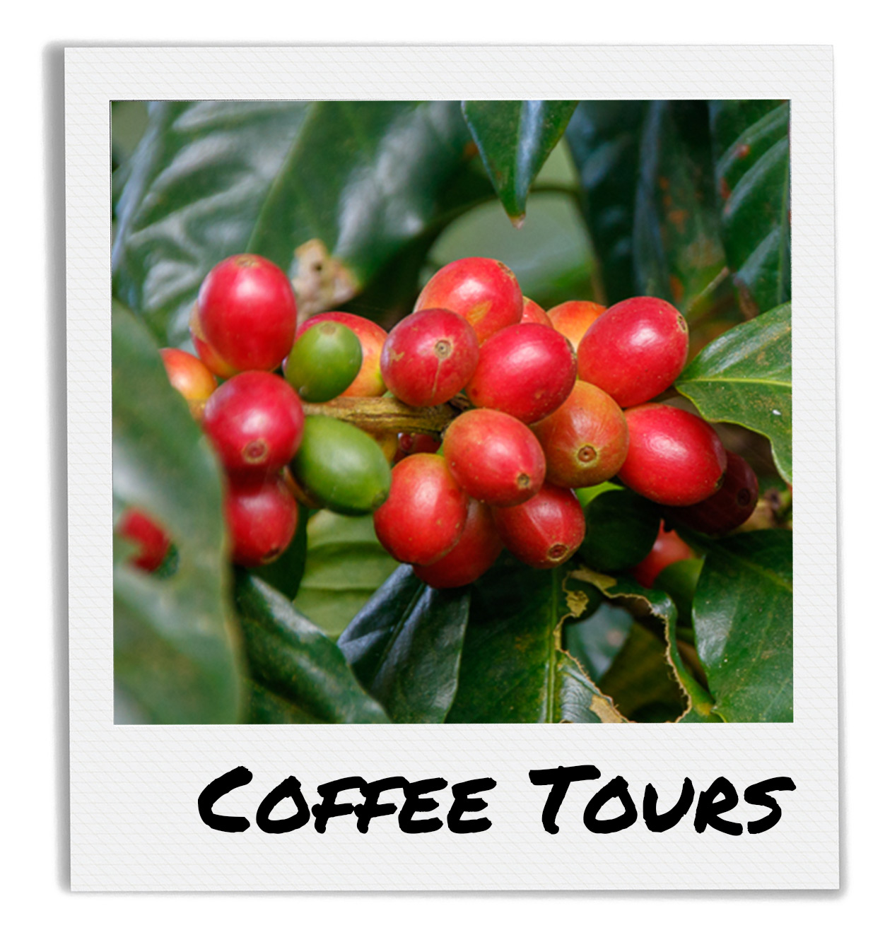 Finca El Peten Organic Coffee Tour