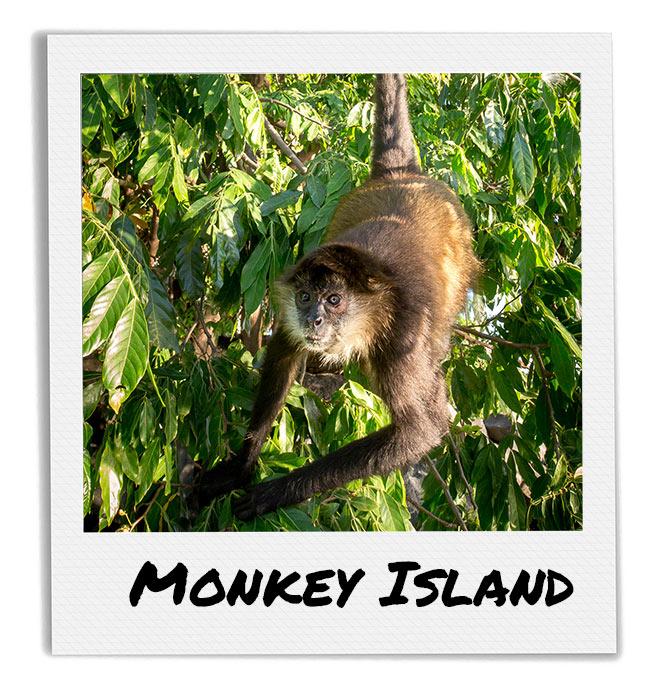 Monkey Island Boat tour in Lake Nicaragua at isletas de Granada from Finca Las Nubes