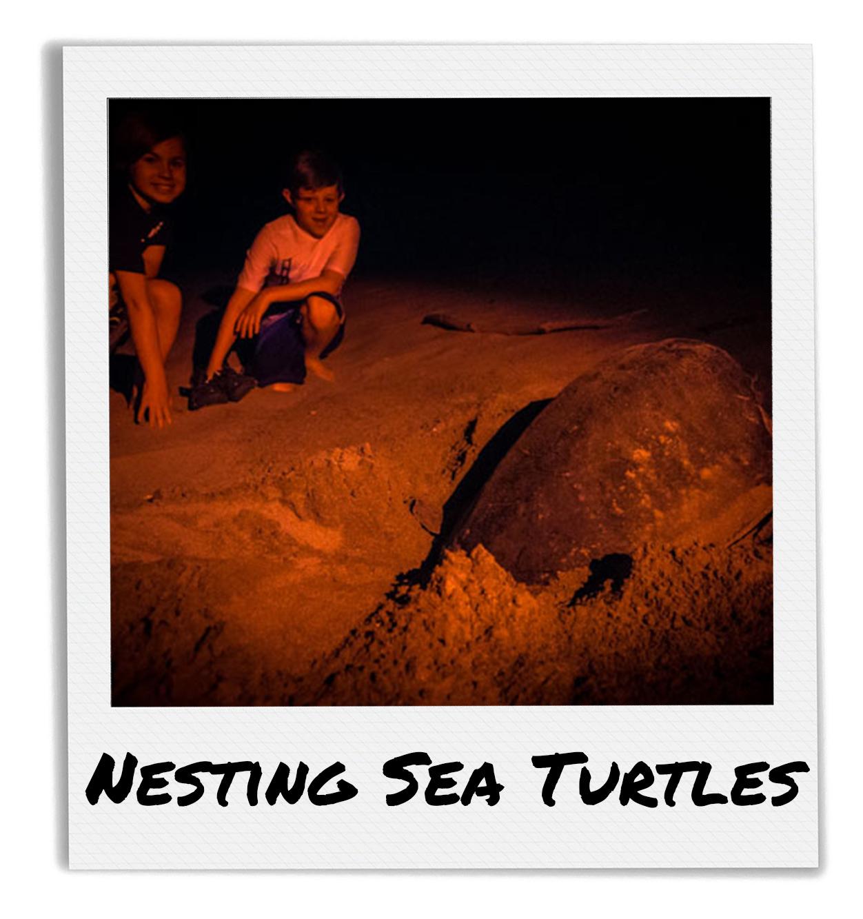 Turtle Nesting Tours at Playa La Flor, Nicaragua